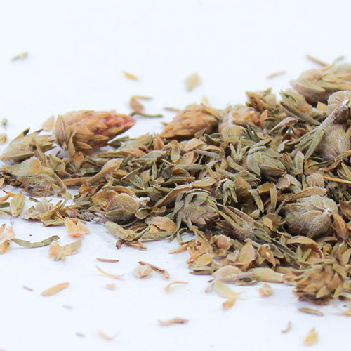 Oregano Herb Tisane