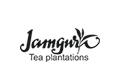 Jamgnra Tea Plantations